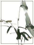 巫氏族谱(龙川下塔)